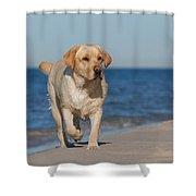 Dog On The Beach Shower Curtain