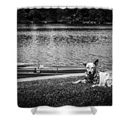 Dog On The Lake #2 Shower Curtain