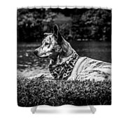 Dog On The Lake Shower Curtain