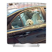 Dog On The Move Shower Curtain