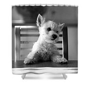 Dog Sitting On The Table Shower Curtain