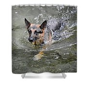 Dog Swimming In Cold Water Shower Curtain
