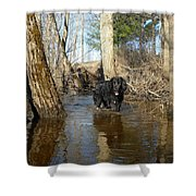 Dog Wading In Swollen River Shower Curtain