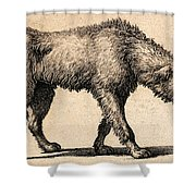 Dog With Rabies, Engraving, 1800 Shower Curtain