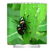 Dogbane Beetles Shower Curtain