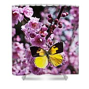 Dogface Butterfly In Plum Tree Shower Curtain