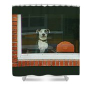 Doggie In The Window Shower Curtain
