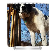 Doggone Cute  Shower Curtain