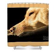 Doggy Dreams Shower Curtain