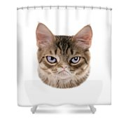 Kitten T-shirt Shower Curtain