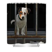 Dogs Family Shower Curtain