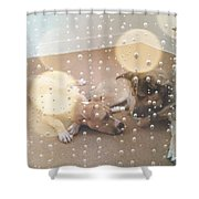 Dogs' Bath Time Gazes Shower Curtain