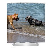 Dogs In Lake Michigan Shower Curtain