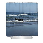 Dogs In The Surf Shower Curtain