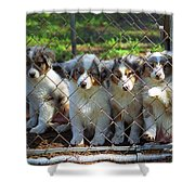 Dogs. Let Us Out #2 Shower Curtain