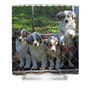 Dogs. Let Us Out #3 Shower Curtain