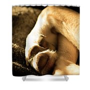 Dogs Paws Shower Curtain