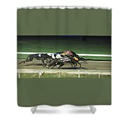 Dogs Racing Shower Curtain