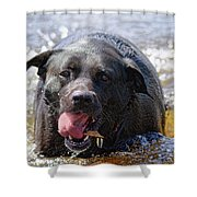 Dogs Sticks And Ponds Shower Curtain