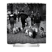 Dog Walking Shower Curtain