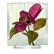 Dogwood Ballet 1 Shower Curtain