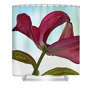 Dogwood Ballet 3 Shower Curtain