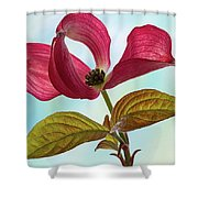 Dogwood Ballet 4 Shower Curtain