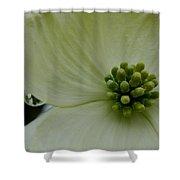 Dogwood Bloom - Closeup Shower Curtain