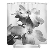 Dogwood Bloom Shower Curtain