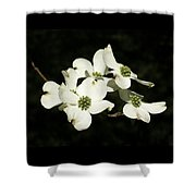 Dogwood Blooms Shower Curtain
