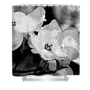 Dogwood Blossoms - Black And White Shower Curtain
