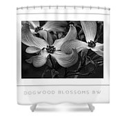 Dogwood Blossoms Bw Poster Shower Curtain
