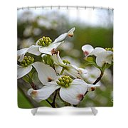 Dogwood Blossoms Shower Curtain
