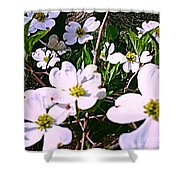 Dogwood Blossoms Pair Up Shower Curtain