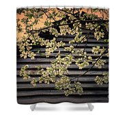 Dogwood Cabin, Smoky Mountains, Tennessee Shower Curtain