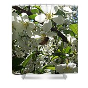 Dogwood Daze Shower Curtain by Carrie Viscome Skinner