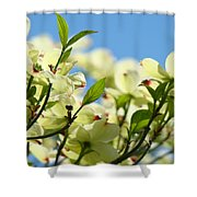 Dogwood Flowers Art Prints Canvas White Dogwood Tree Blue Sky Shower Curtain