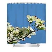 Dogwood Flowers Art Prints White Flowering Dogwood Tree Baslee Troutman Shower Curtain