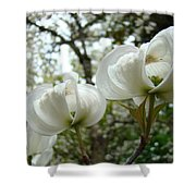 Dogwood Flowers White Dogwood Trees Blossoming 8 Art Prints Baslee Troutman Shower Curtain