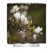Dogwood Gathering Shower Curtain
