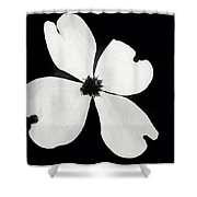 Dogwood In Days Now Past Shower Curtain