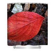 Dogwood Leaf Shower Curtain