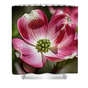 Dogwood Spring Shower Curtain