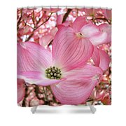 Dogwood Tree 1 Pink Dogwood Flowers Artwork Art Prints Canvas Framed Cards Shower Curtain
