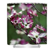 Dogwood Tree Shower Curtain