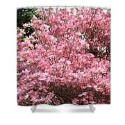 Dogwood Tree Flowers Art Prints Canvas Pink Dogwood Shower Curtain