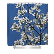 Dogwood Tree In Spring Shower Curtain