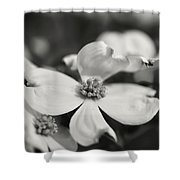Dogwoods In Black And White Shower Curtain
