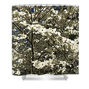 Dogwoods In Bloom Shower Curtain
