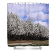 Bradford Pear Trees On Display Shower Curtain